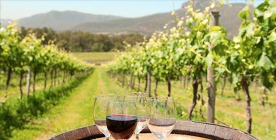 Hunter Wine Tours - Hunter Valley Pokolbin Accommodation - Beltana Villas