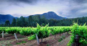 Gandore wines - Hunter Valley Activities - Beltana Villas