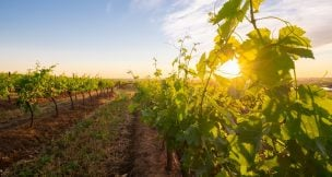 James estate wines - Hunter Valley Activities - Beltana Villas