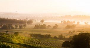 Keith tulloch wines - Hunter Valley Activities - Beltana Villas