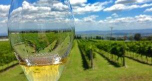 Thomas wines - Hunter Valley Activities - Beltana Villas